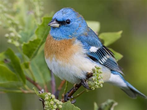 wallpaper blue with birds download wallpaper 1024x768 beautiful blue bird hd background