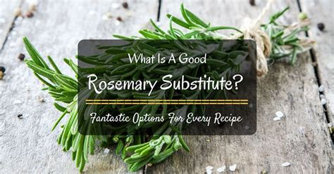 what is a good rosemary substitute fantastic options for