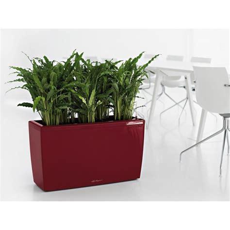 lechuza cararo planter newpro containers - Lechuza Cararo