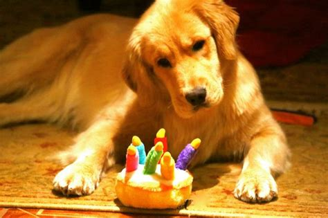 golden retriever happy birthday images happybirthday goldenretreiver caauute birthday cakes puppys and lush