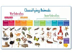 Funky Definition animal classification mural