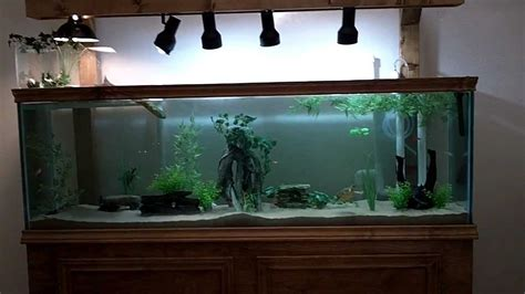 125 gallon diy turtle community tank