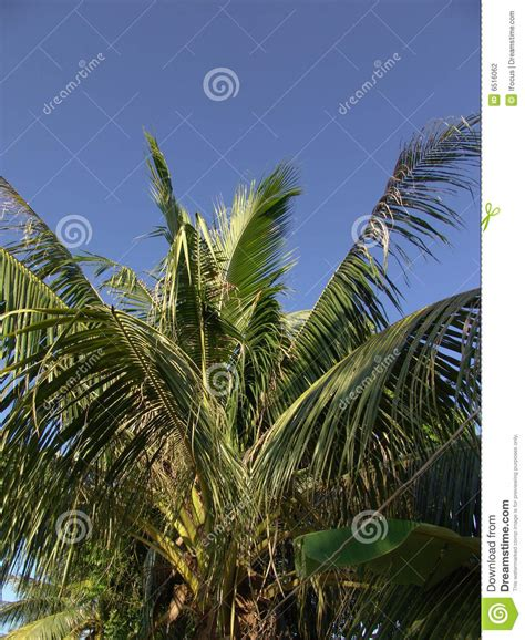 palms throughout the world palm tree stock photography image 6516062