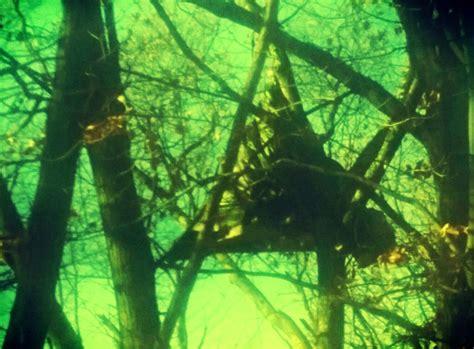 tree shop valley ny hudson valley earth maintain tree sits to stop ny