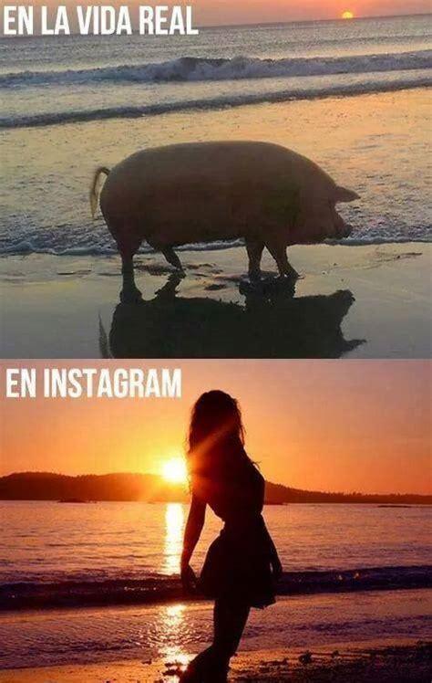 imagenes chistosas reales en la vida real y en instagram imagenes chistosas