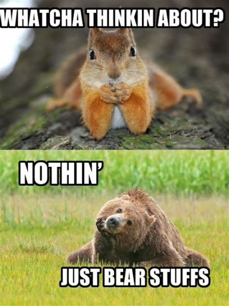 Whatcha Thinkin About Meme - funny animal pictures of the day 10 pics funny pictures