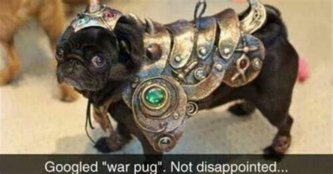war pug war pug woof pug lol and what is