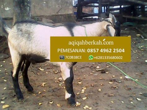 Aqiqah Recommended Di Surabaya hp 085749622504 jasa kambing aqiqah di surabaya