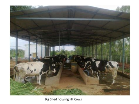 Plans To Build A Barn by Amrutha Dairy Farms