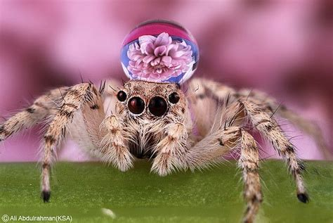 Cute Spider Memes - spider meme the common and world maps on pinterest