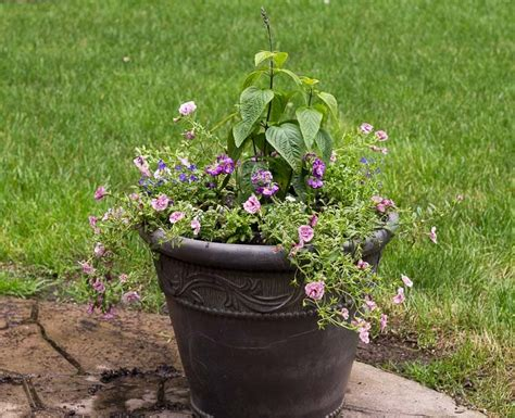 Planter Ideas Sun by Sun Planter Ideas Garden Matter