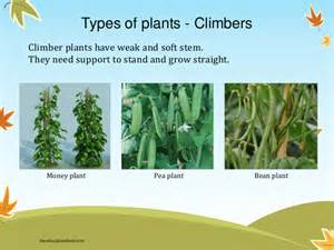 different types of climbing plants environmental science evs plants class ii