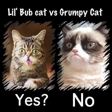 lil bub  grumpy cat purrfect  caturday