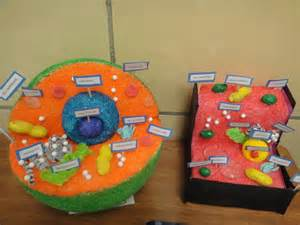 Katie s klassroom cell functions project 5th grade