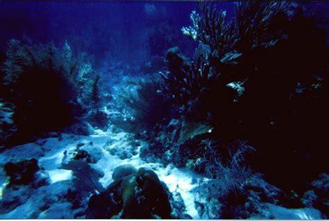 Underwater Landscape Pictures Underwater Landscape Flickr Photo