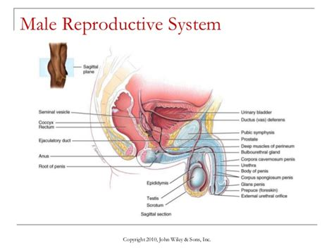Section 39 1 The Endocrine System 84 section 39 3 the reproductive system chapter 39