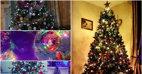 your fantastic christmas tree photos 2016 daily post