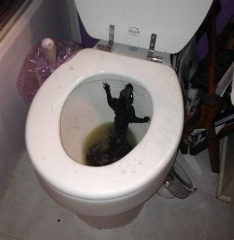 Things In The Bathroom In by 11 Strangest Things Found In Toilets Oddee