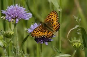 top parents fr observer les papillons des jardins