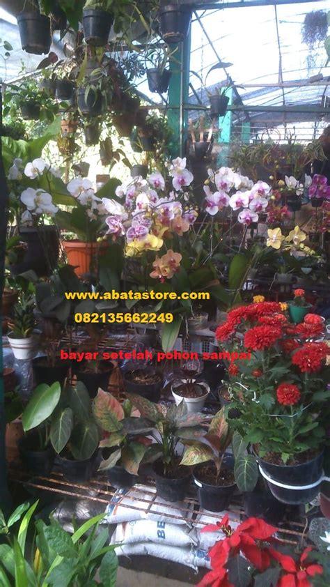 Bibit Pohon Anggrek jual pohon bunga anggrek berbagai jenis benih ikan dan