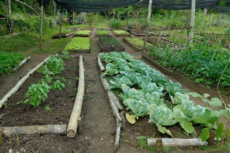 Garden Of Organic Farm The Organic Farm Matava