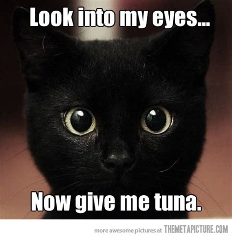 Funny Black Cat Memes - black cat memes funny like success