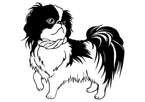 best shoo for a shih tzu coloring page shih tzu img 29834