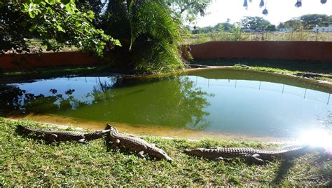 Mba Reptiles by Kalimba Reptile Park Afro Tourism