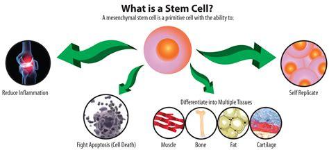 stem cells stem cells banking