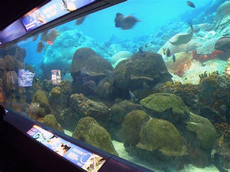 flower garden reef fgbnms zoo and aquarium partners