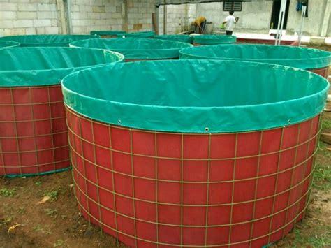 Pakan Ikan Lele 1000 Ekor 6 pakan alternatif ikan lele agar cepat besar kolam terpal