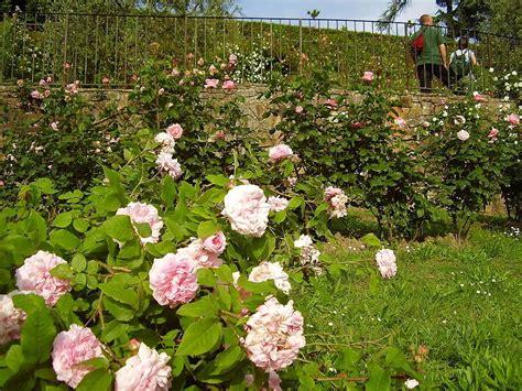 giardino delle a firenze giardino delle firenze visit italy