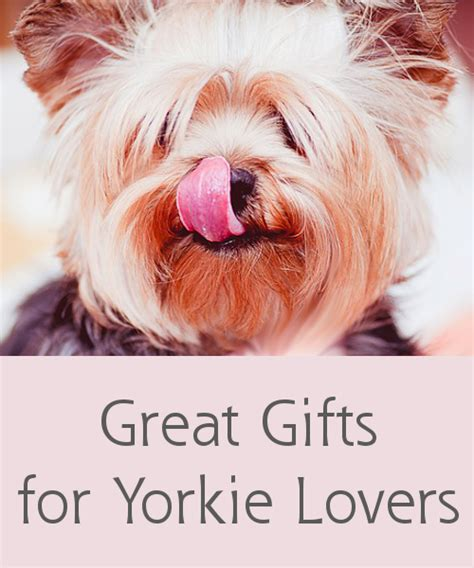 gifts for yorkie really gifts for yorkie