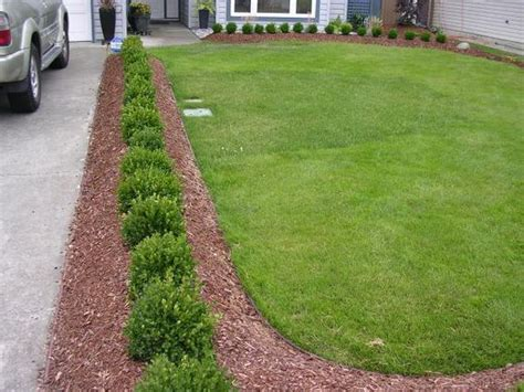 Landscape Edging Along Sidewalk Boxwoods And Bender Board Border Simple And Clean