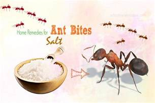 top 20 approved home remedies for ant bites treatment