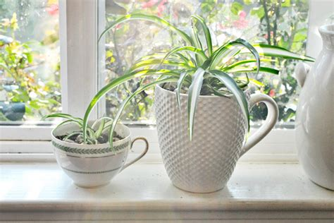 best indoor plants for clean air best indoor plants for cleaning the air the hegseth home