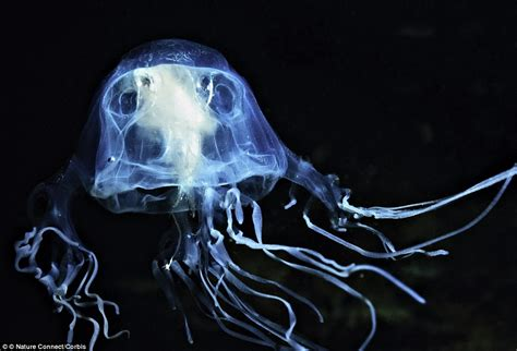 News Roundup Bushfires Jellyfish And Gorillas Attack by Miranda Krestovnikoff On How Safe Your Is From