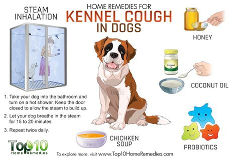 home remedies for kennel cough in dogs top 10 home remedies