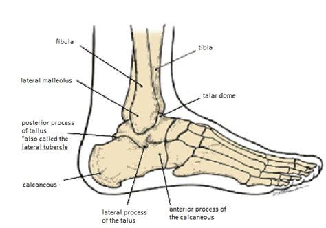 foot side of foot diagram skeletal system diagrams