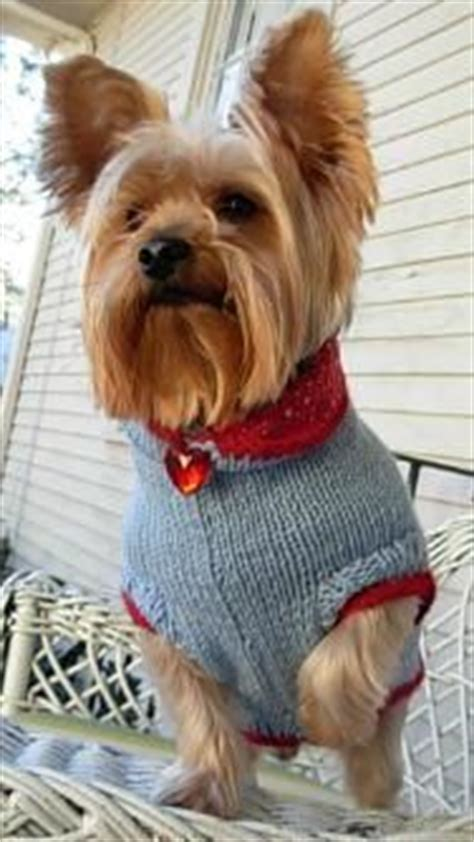 sweaters for yorkies 1000 images about dogs yorkie sweaters and on sweaters