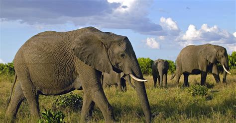 hd elephants wallpapers   hd animals wallpapers