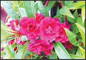 Names Of Garden Flowers Doo Guan Nursery Flowering Plants