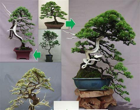 langkah  membuat bonsai secara umum  menanam bunga