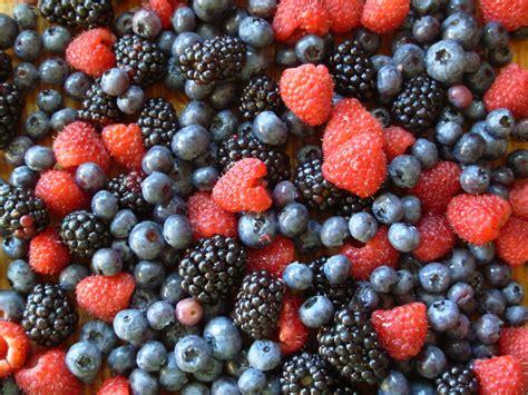 fruit or berry blueberry tuesday summer berry crisp family