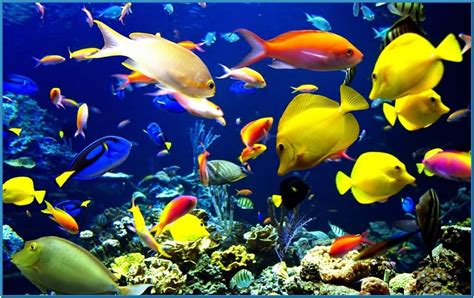 wallpaper aquarium mac aquarium screensaver mac hd download free