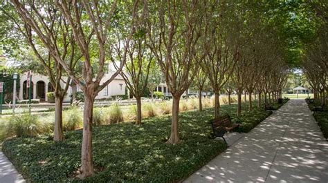 commercial trees benefits of commercial landscaping