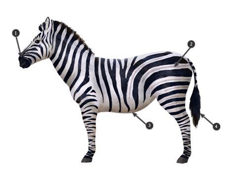 zebra pattern dwg zebra pattern drawing