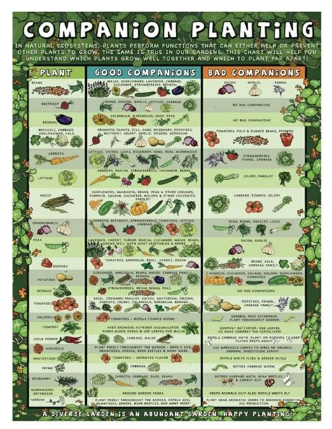 herb companion planting chart herbal gardens 17 best images about companion planting on pinterest