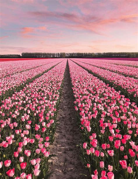 couple capture  technicolor wonderland  hollands
