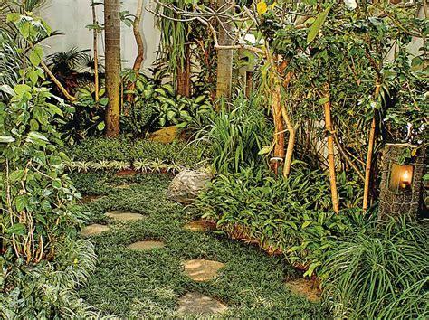 Tanaman Rumput Mini Kucai kucai mini alternatif pengganti rumput taman
